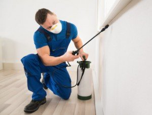 The Importance of the Building and Pest Inspections